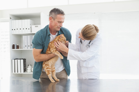 Owner holding his cat as vet examines it in her office photo