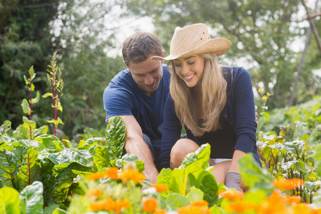 gardening gloves: Cute couple gardening on sunny day at home in the garden