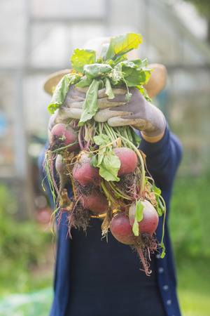 home grown: Woman showing home grown vegetables at home in the garden Stock Photo