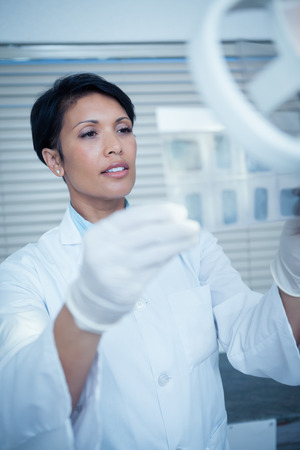 short gloves: Concentrated female dentist looking at x-ray