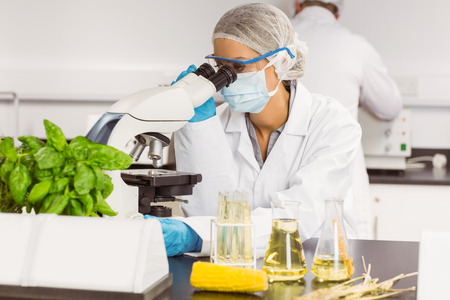 science scientific: Food scientist using the microscope at the university