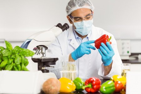 Food scientist examining a pepper at the university