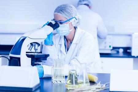 mazorca de maiz: Cient�fico de alimentos usando el microscopio en la universidad Foto de archivo