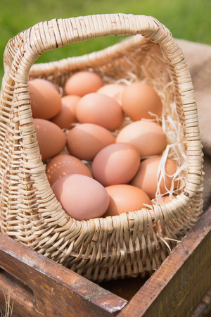 country living: Basket of fresh organic eggs on a sunny day