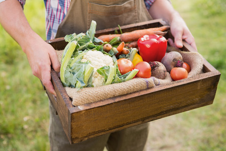 sufficiency: Farmer carrying box of veg on a sunny day Stock Photo