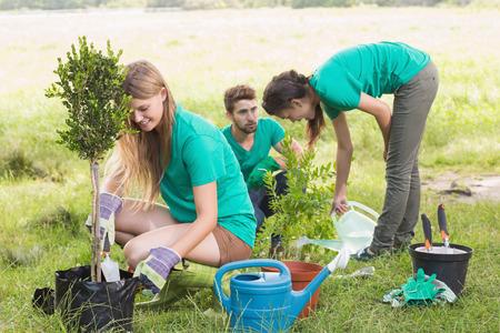 plantando arbol: Amigos felices de Jardiner�a en la comunidad en un d�a soleado Foto de archivo