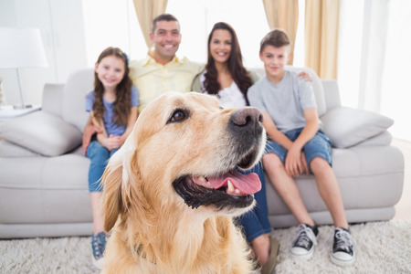 Close-up of dog sitting with family at home Stock Photo