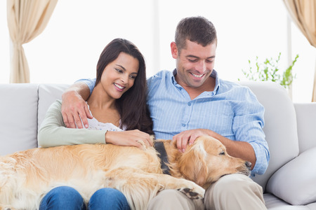 stroking: Happy couple stroking Golden Retriever while sitting on sofa at home