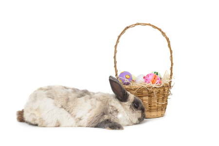 Fluffy bunny with basket of Easter eggs on white background photo