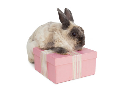 celebratory event: Fluffy bunny with pink gift box over white background