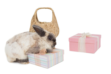 celebratory event: Fluffy bunny with gift boxes and wicker basket over white background