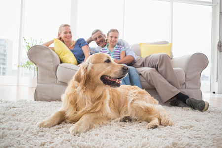 one family: Golden Retriever on rug with family in background at home