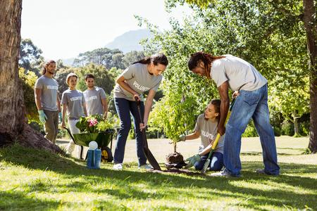 Team van vrijwilligers tuinieren samen op een zonnige dag