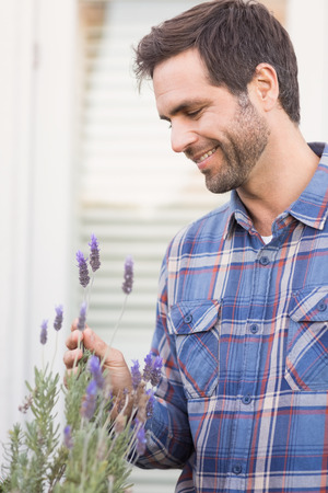 Happy man smelling his lavender plant on a sunny day