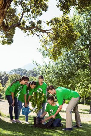 sembrando un arbol: Los activistas medioambientales que plantan un �rbol en el parque en un d�a soleado