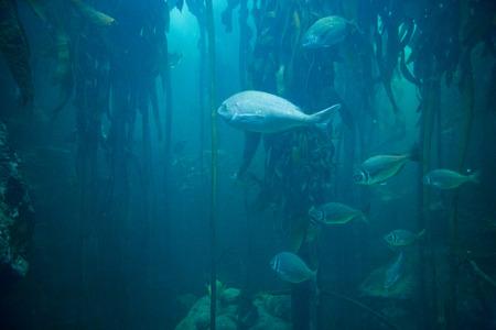 fishtank: Fish swimming in tank at the aquarium Stock Photo