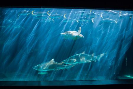 fish tank: Nataci�n de la tortuga en la pecera en el acuario