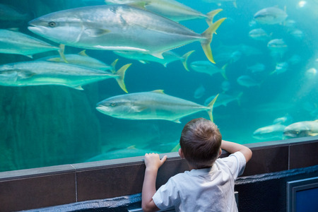 Little boy looking at fish tank at the aquarium