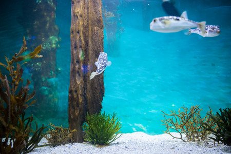 fishtank: Fish swimming in a tank at the aquarium Stock Photo
