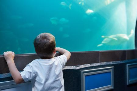 fish tank: Ni�o peque�o que mira al tanque de peces en el acuario Foto de archivo