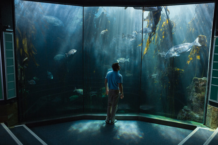 fish tank: Hombre que mira la pecera en el acuario