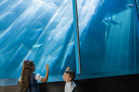 fishtank: Little siblings looking at fish tank at the aquarium
