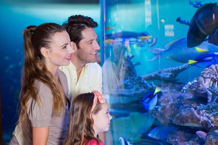 fishtank: Happy family looking at fish tank at the aquarium Stock Photo