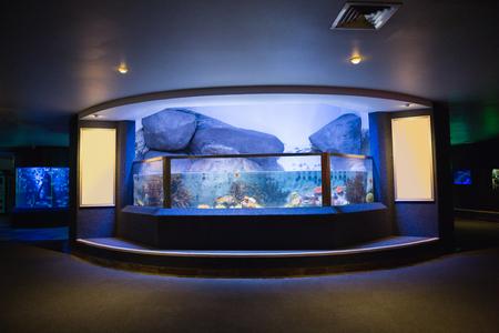 fish tank: Lit up fish tank at the aquarium