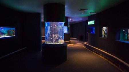 fishtank: Lit up fish tanks at the aquarium