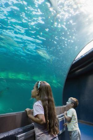 fish tank: Los peque�os hermanos que buscan en pecera en el acuario