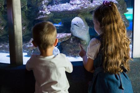 fish tank: Little siblings looking at fish tank at the aquarium
