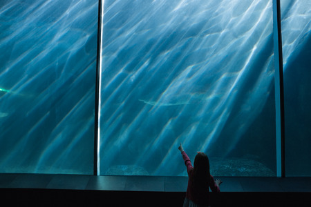 fishtank: Little girl looking up at fish in tank at the aquarium