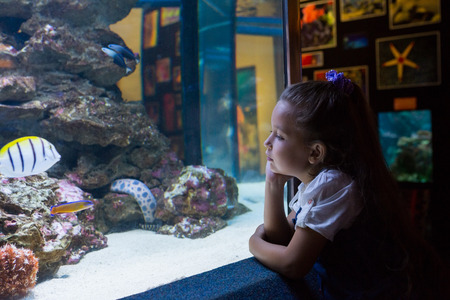 Little girl looking at fish tank at the aquarium Stock Photo