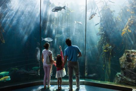 水族館の水槽を見て家族 写真素材