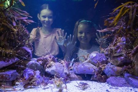 peces de acuario: Muchachas lindas que miran la pecera en el acuario