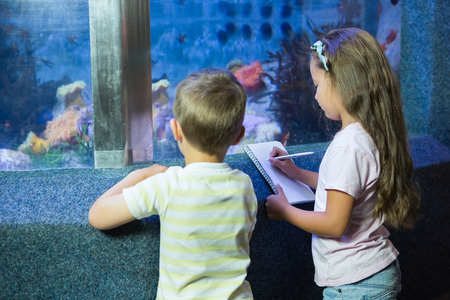 fish tank: Cute siblings looking at fish tank at the aquarium