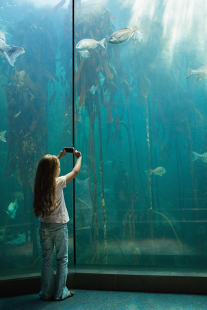 fish tank: Ni�a que mira el tanque de peces en el acuario
