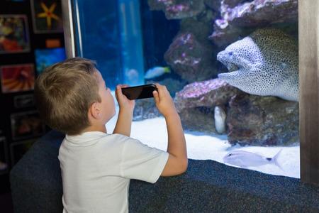 fishtank: Little boy looking at fish tank at the aquarium