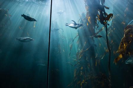 fishtank: Fish swimming in a tank at the aquarium Stock Photo