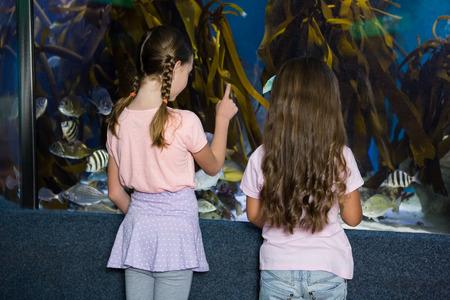 fishtank: Cute children looking at fish tank at the aquarium Stock Photo