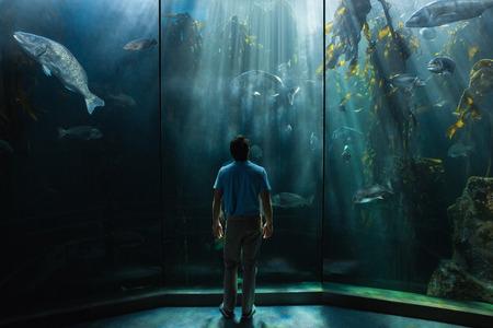 fish tank: Man looking at fish tank at the aquarium