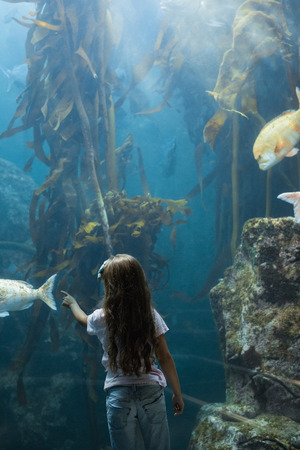 fishtank: Little girl looking at fish tank at the aquarium Stock Photo