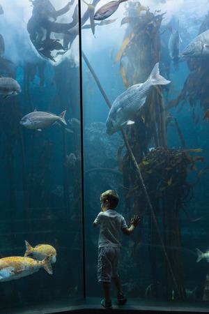 fish tank: Little boy looking at fish tank at the aquarium