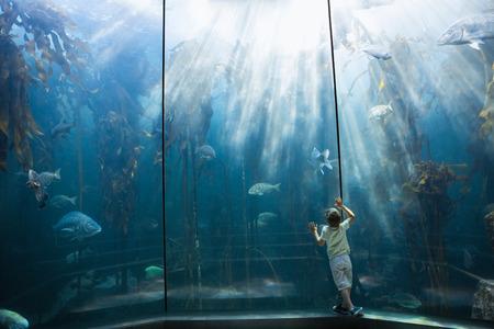 Little boy looking at fish tank at the aquarium 免版税图像
