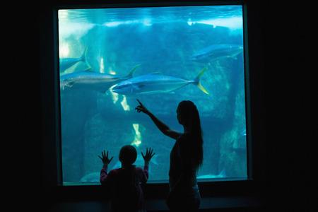 fishtank: Happy mother and daughter looking at tank at the aquarium