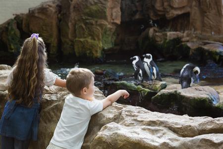 animales del zoologico: Los peque�os hermanos que buscan en los ping�inos en el acuario