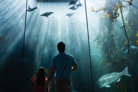 fishtank: Father and daughter looking at fish tank at the aquarium