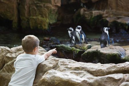 animales del zoologico: Ni�o peque�o que mira a los ping�inos en el acuario Foto de archivo