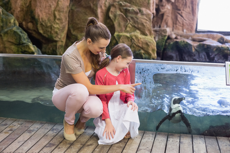 zoologico: Happy family mirando a los pingüinos en el zoológico