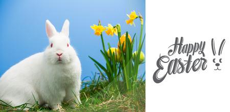 lapin blanc: Joyeuses Pâques contre le blanc moelleux lapin assis à côté de jonquilles aux ?ufs de Pâques Banque d'images
